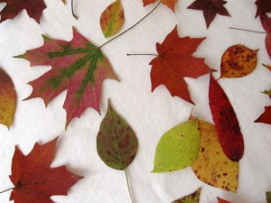 Collecting fall leaves with little ones can be an educational opprotunity that is loads of fun!